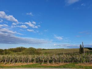 Farm walks map summer skies